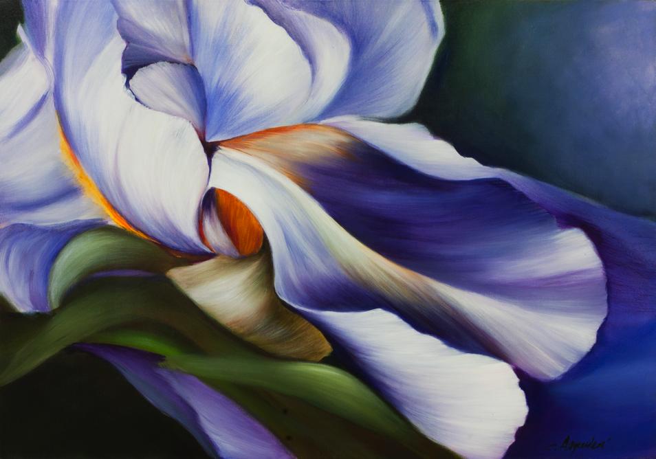 (100×70) Iris blu