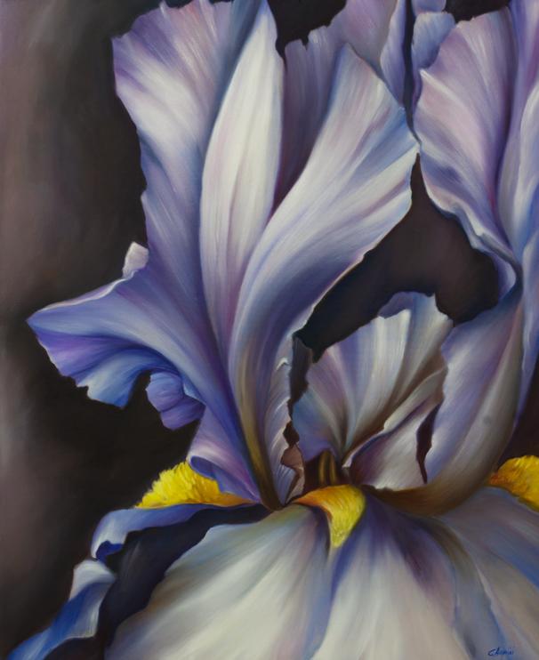 (80×120) Iris blu